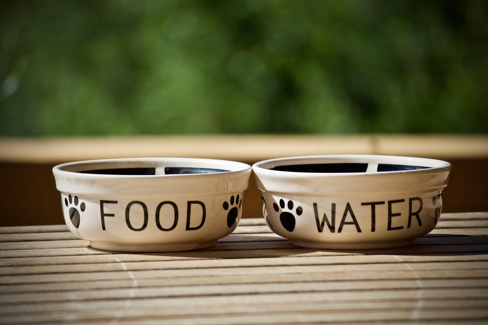 Take water and dog treats